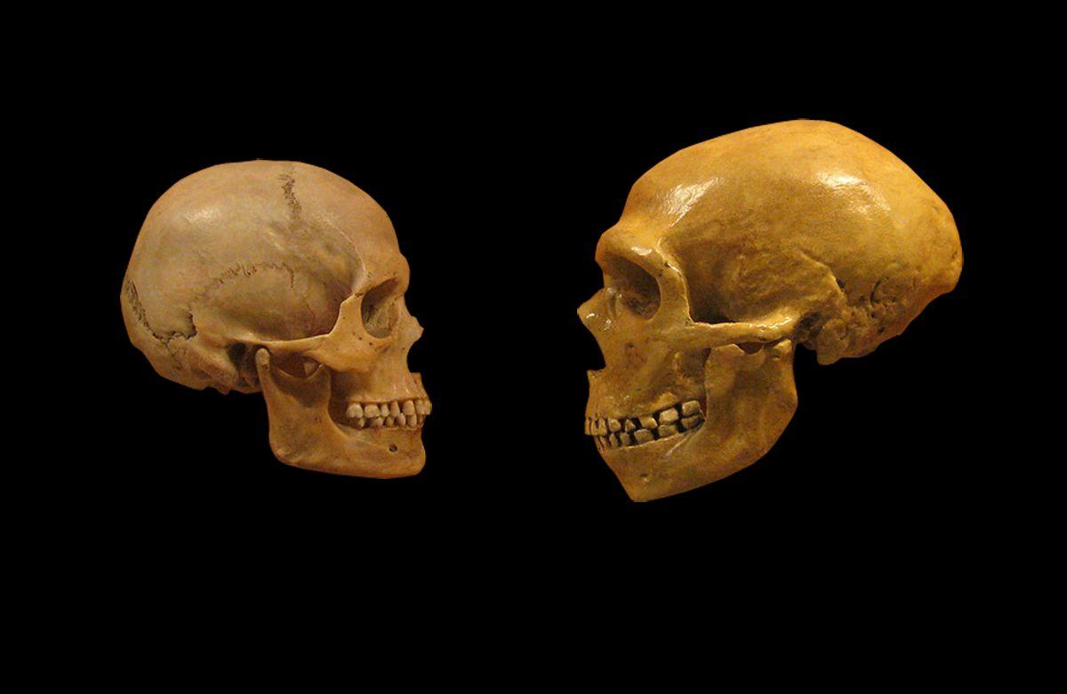 neanderthal-vs-cro-magnon